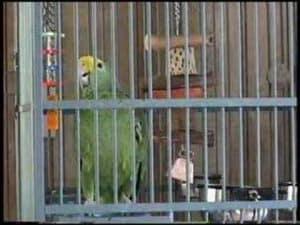 Let's All Sing Like The Birdies Sing