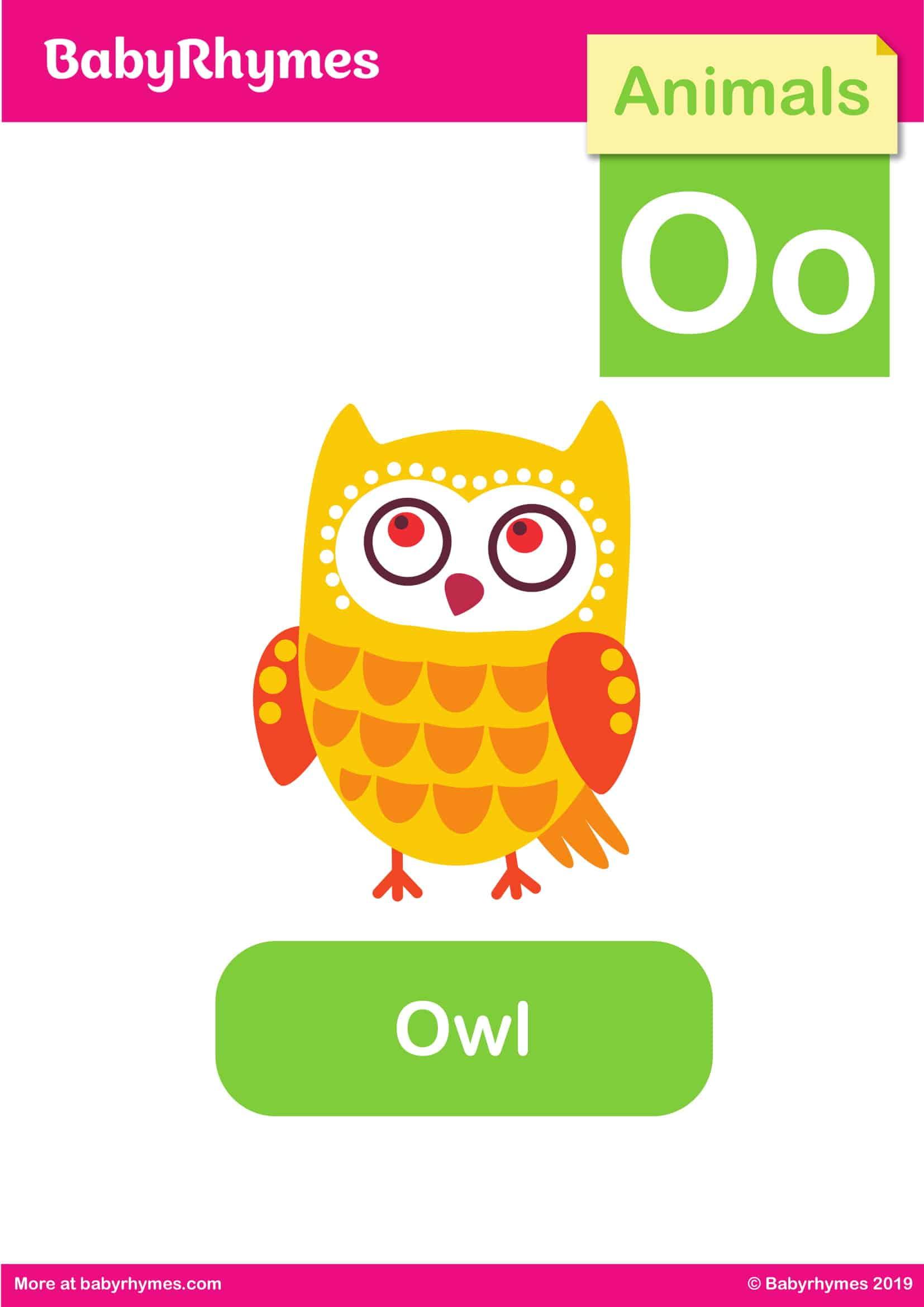 Owl Flash card - Animals - Baby Rhymes